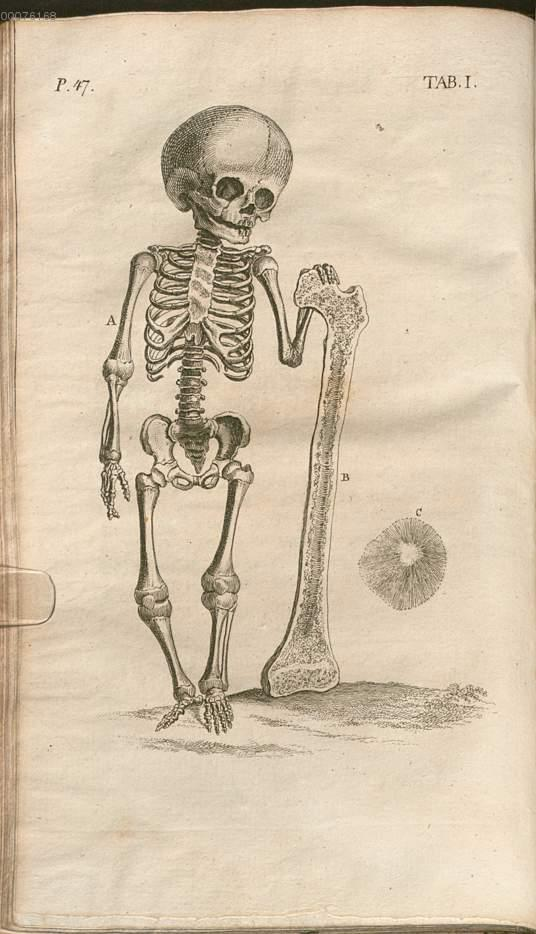 Blumenbach, Johann Friedrich: Cheselden, William: W. Cheselden\'s ...